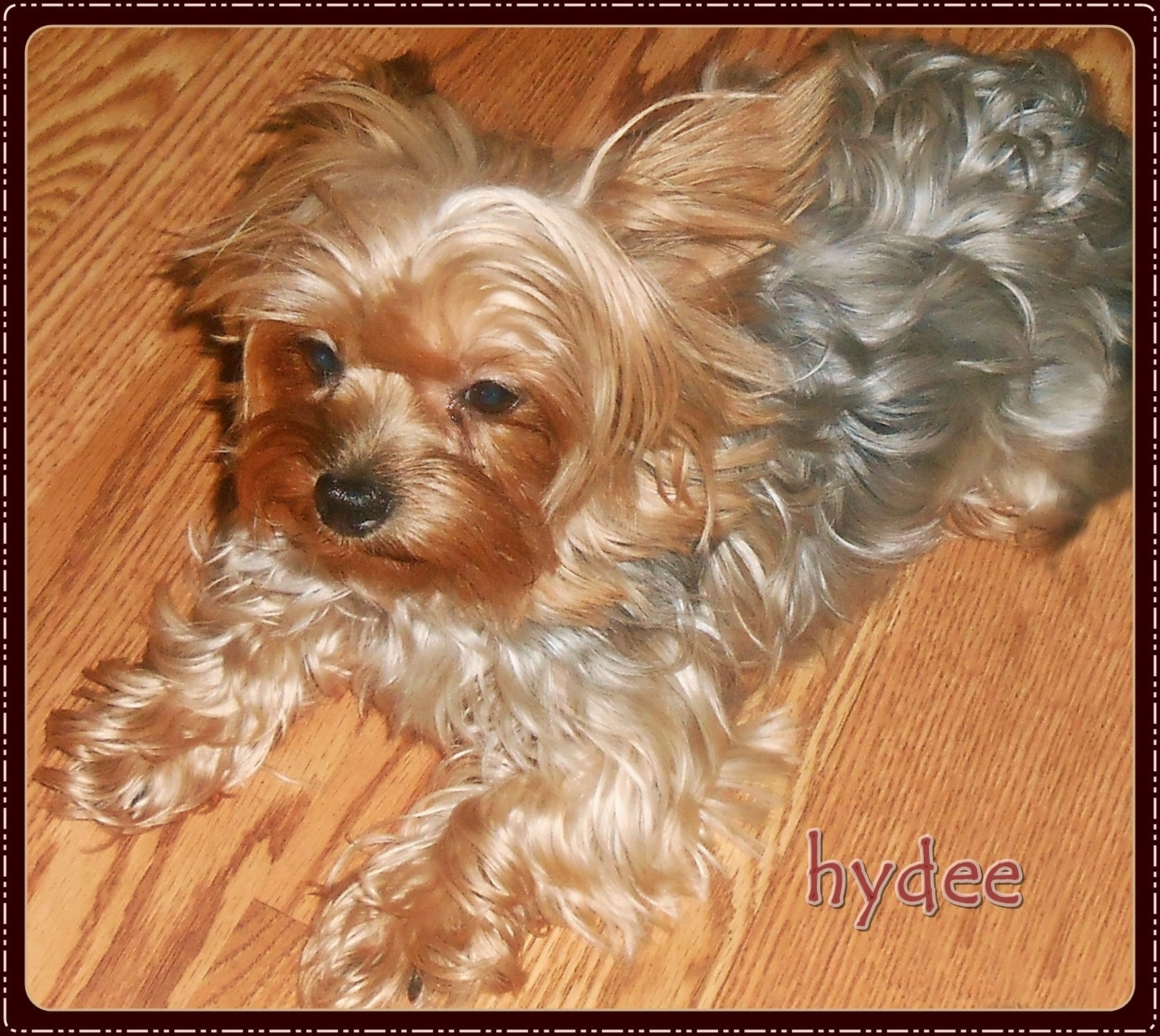 Hydee